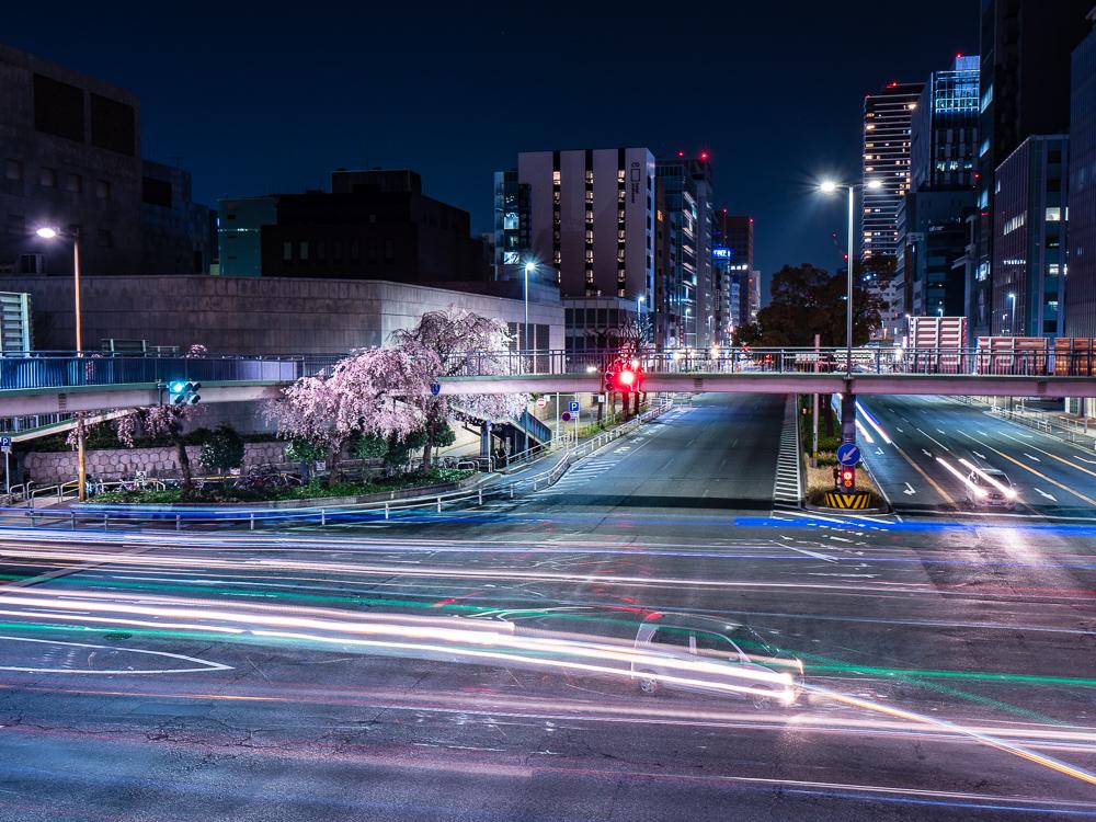 名古屋 桜 出張写真撮影